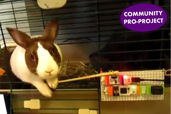 Large jude bunny