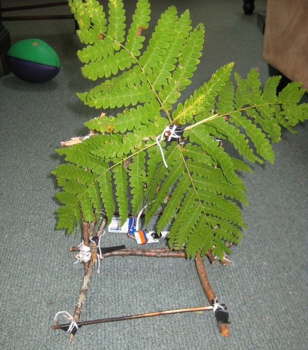 Large fern fan front